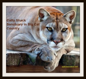 catty shack cougar
