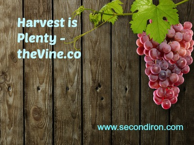 harvest, vine, theVine.co, charity