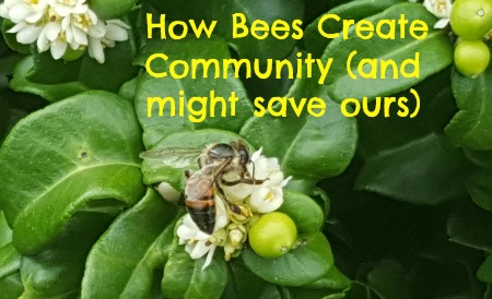 How Bees Create Community (and might save ours)