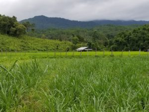 Rice farm in the mountains of Thailand